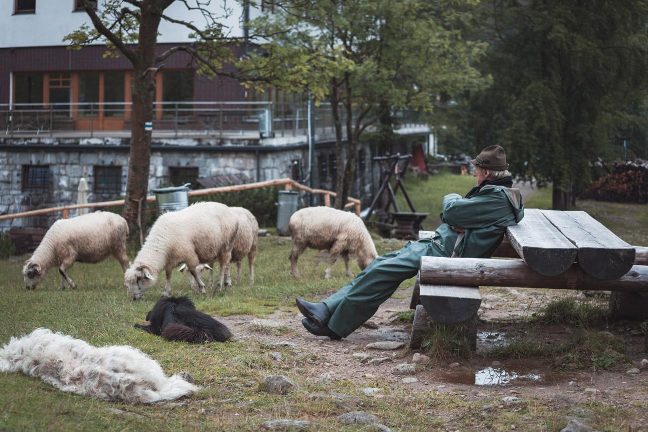 Tatry, Polana Kalatówki, owce