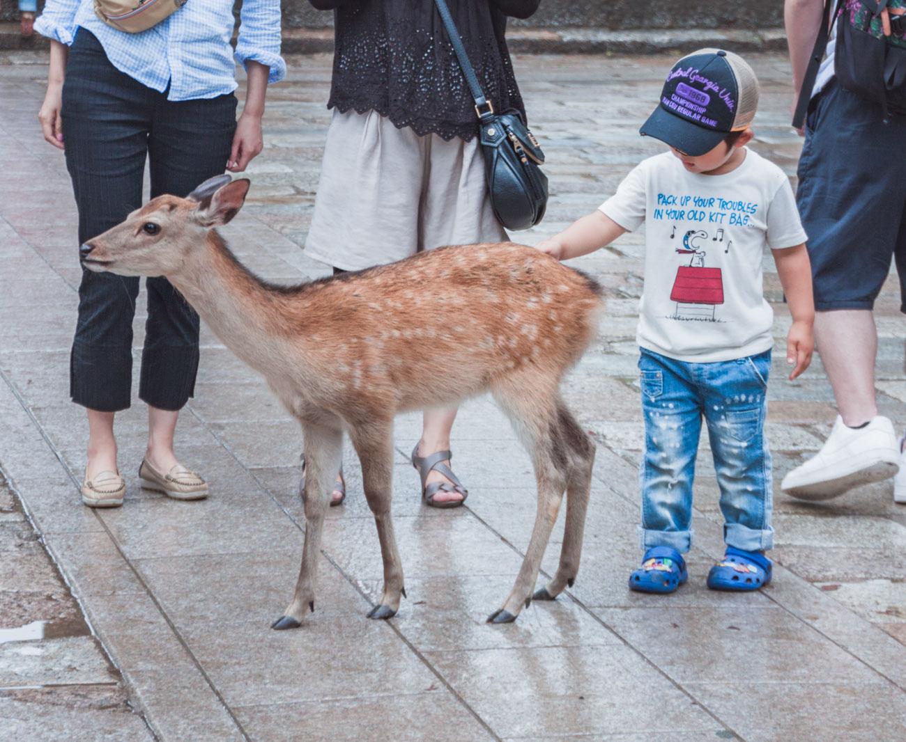 Japonia, Nara
