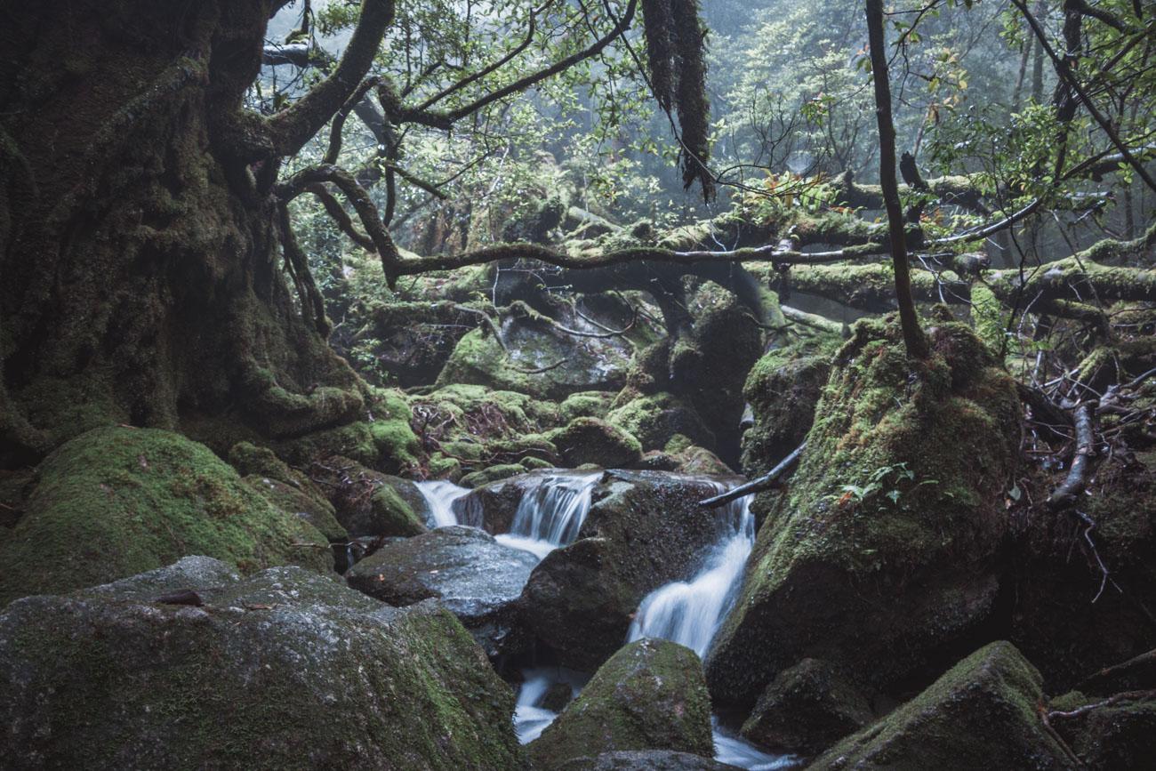 Japonia, Yakushima