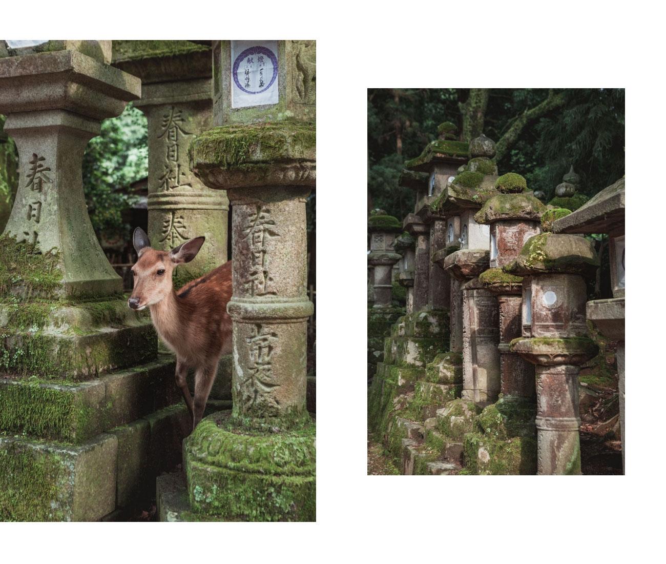 Japonia Nara Kasuga Taisha