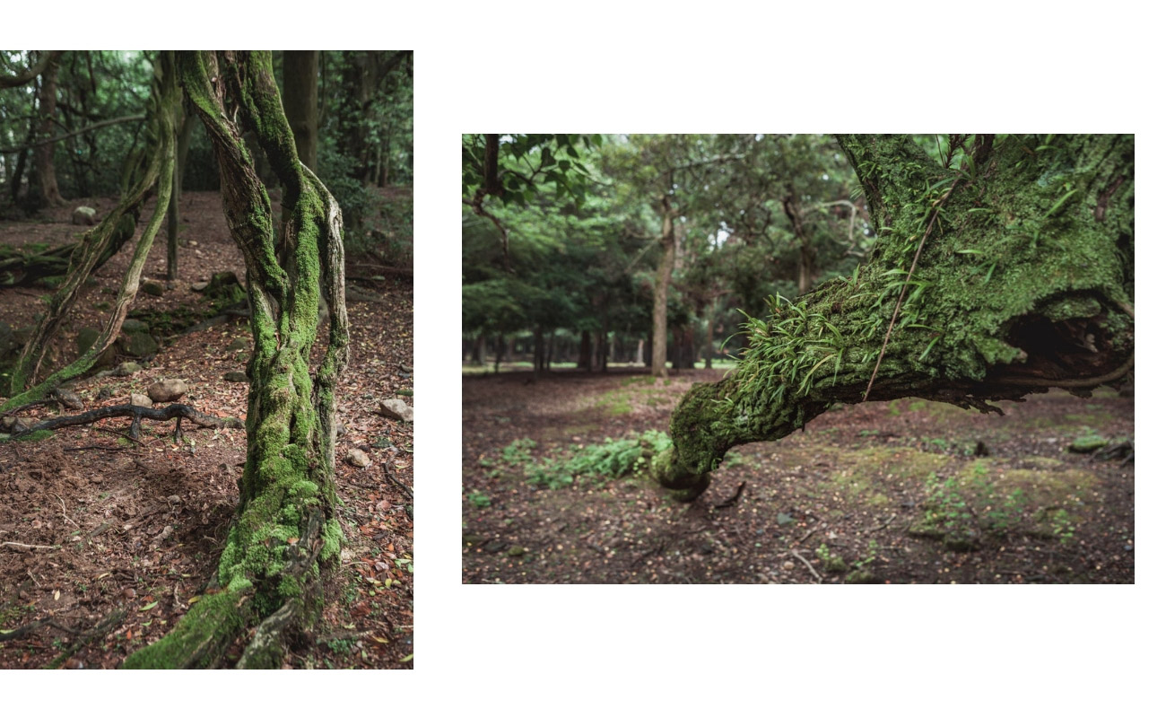 Japonia park Nara