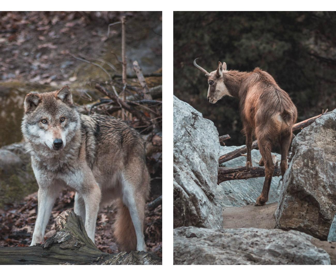innsbruck alpein zoo