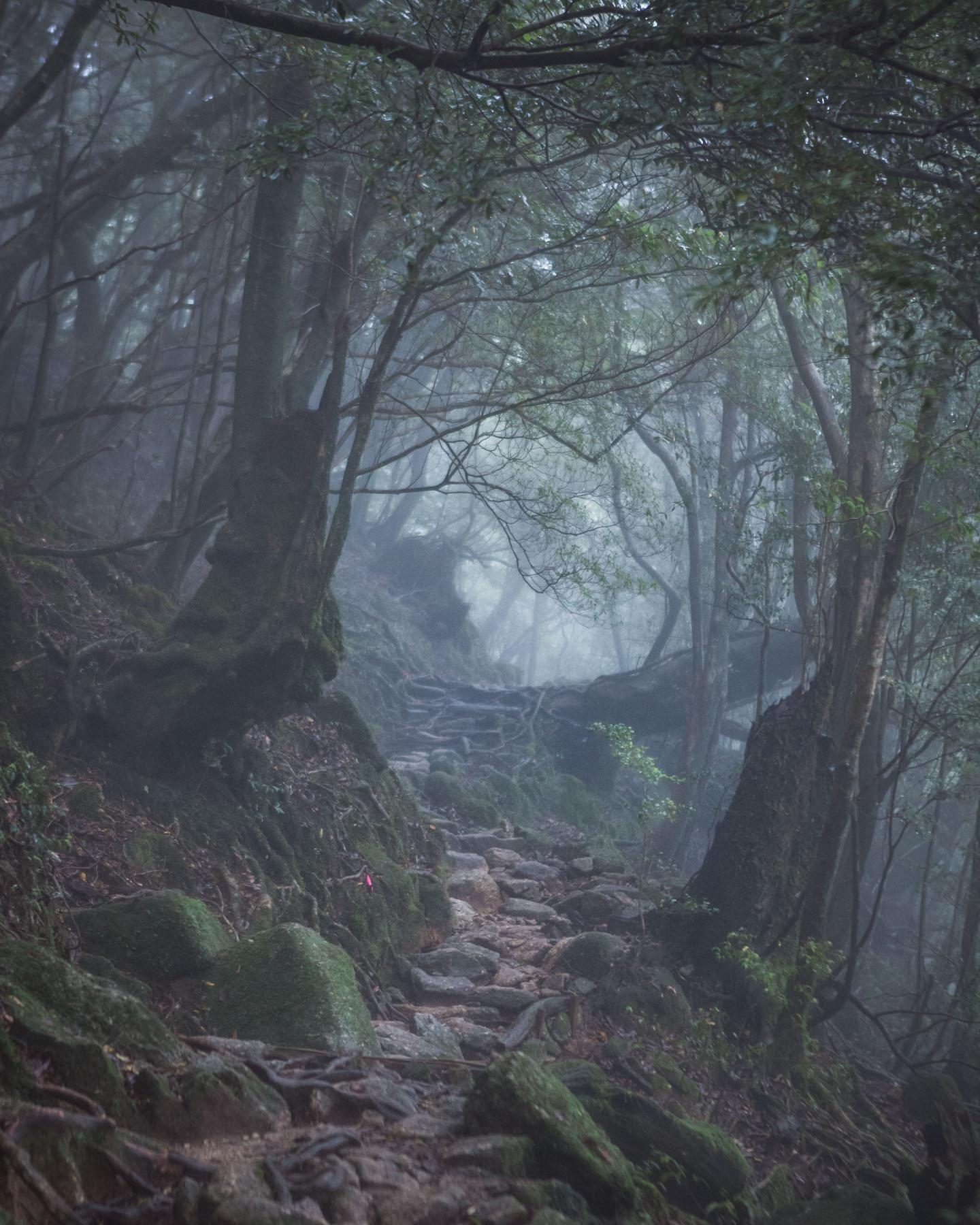 yakushima japonia