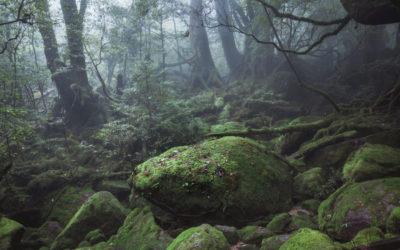 JAPONIA: WYSPA YAKUSHIMA – NAJSTARSZE CEDRY I INSPIRACJA MONONOKE
