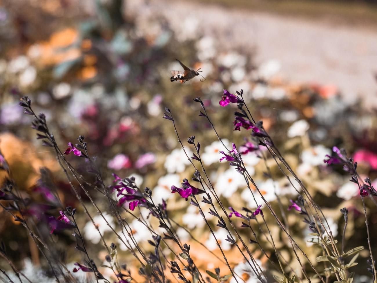lotaryngia luneville ogród