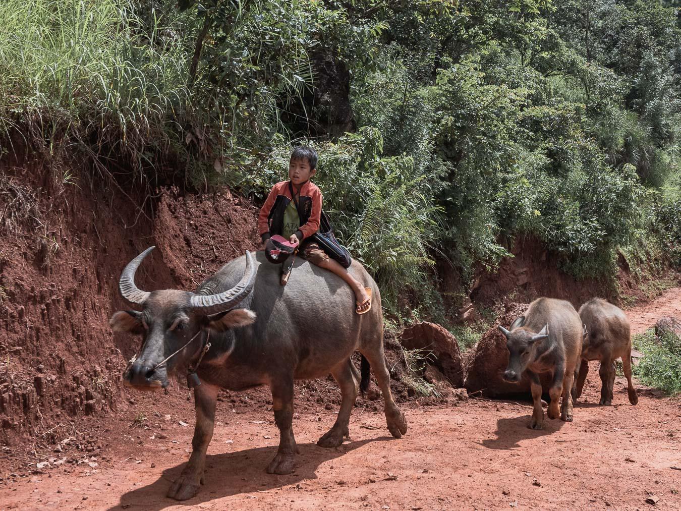 birma trek kalaw
